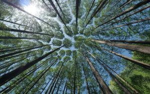 boscos canvi climatic